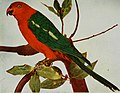 Nature neighbors, embracing birds, plants, animals, minerals, in natural colors by color photography, containing articles by Gerald Alan Abbott, Dr. Albert Schneider, William Kerr Higley...and other (14565460707).jpg