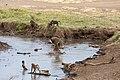 Nature of Ngorongoro Conservation Area (115).jpg