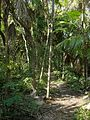 Nature trail - Flickr - pellaea.jpg
