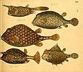 Naturgeschichte in Bildern mit erläuterndem Text (Taf. XIV) (6058657137).jpg