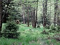 Naturpark Arnsberger Wald fd (2).jpg