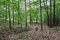 Naturschutzgebiet Rehburger Moor IMG 3202.jpg