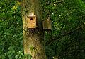 Nestkasten bij de kooiplas. Locatie. de Buismans Einekoai Gytsjerk 02.jpg