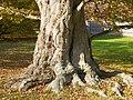 Newport, Rhode Island (2315108269).jpg