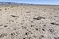North-northwest of Lone Butte - Flickr - aspidoscelis (1).jpg