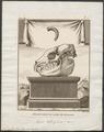 Nycticebus tardigradus - 1773-1807 - Print - Iconographia Zoologica - Special Collections University of Amsterdam - UBA01 IZ19700107.tif