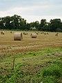 Oak Lawn across the stubble - geograph.org.uk - 547494.jpg