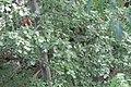 Oak canopy 19-10-04 182.jpg