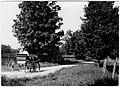 Oakville - road with ladies in buggy - June 6, 1914 (21465009072).jpg