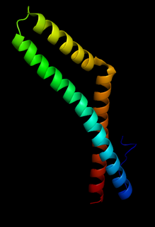 Occludin Mammalian protein found in Homo sapiens