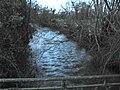 Occoches l'Authie (en aval depuis pont) 1.jpg