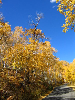Sundance Resort - Image: October 12 2005 Alpine Loop Utah United States