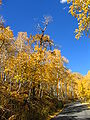 October 12 2005 Alpine Loop Utah United States.JPG