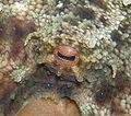 Octopusv cropped.JPG