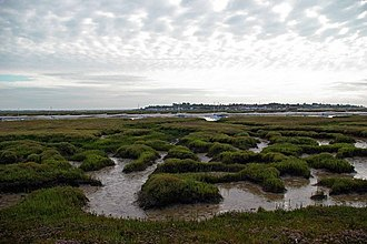 Tolleshunt D'Arcy - Saltings on eastern edge of Old Hall Marshes