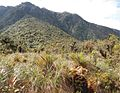 On Pampa of Quebrada Yanachaga at an altitude of 3000 m - ZooKeys-235-051-g009B.jpeg