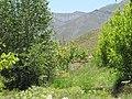 One mini garden in North of Mahdishahr - panoramio.jpg
