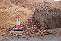Onions and onion detritus composting - geograph.org.uk - 1516691.jpg