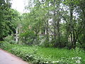 Oranienbaum Sady2012 4634.jpg