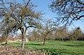 Orchard near Newbridge Farm - geograph.org.uk - 1217058.jpg