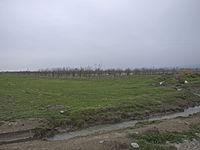 Orchards in Shabran Rayon.jpg