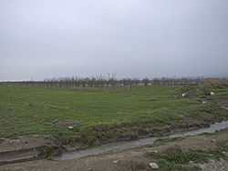 Orchards north of Gəndov