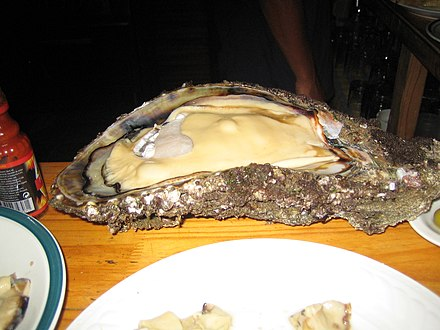 Giant oyster in southern Angola Ostra gigante em Angola.jpg