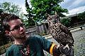 Owls @ Dragonheart, Enschede (9546617071).jpg
