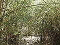 P12 Lawachara National Park, In Moulovibajar, Bangladesh.jpg