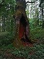 Památné stromoví Bransoudov 06.jpg