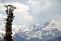 Paragliding - Gulaba - Kullu 2014-05-10 2469.JPG