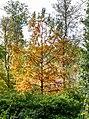 Parkansichten Queen-Auguste-Victoria-Park (Umkirch) jm54329 ji.jpg