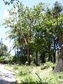 Parque del Este 2012 046.JPG