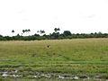 Parque nacional Aguaro-Guariquito 045.jpg