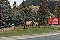 Passeio em Banff 2019 (7564).jpg