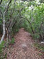 Path Through Hardwood Hammock - panoramio.jpg