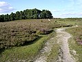 Path across White Moor, towards Longwater Lawn, New Forest - geograph.org.uk - 45726.jpg