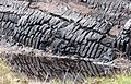 Peat cutting & reflection (3586683408).jpg