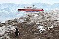 Penguin plus MS Expedition (24635742482).jpg