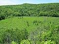 Penokee wetland - panoramio (1).jpg