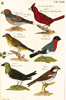 A set of coloured bird prints, showing (clockwise top to bottom) a Hawfinch, a Northern Cardinal, a Bullfinch, a House Sparrow, a Crossbill and a Greenfinch.