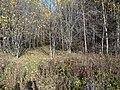 Permskiy r-n, Permskiy kray, Russia - panoramio (1168).jpg