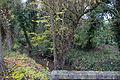 Perthes-en-Gatinais - Ru du Rebais - 2012-11-14 - IMG 8184.jpg