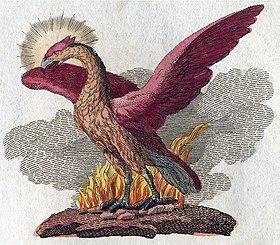 Mythe du Phénix dans OISEAUX 280px-Phoenix-Fabelwesen