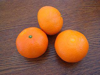 Tangor Citrus fruit cross between mandarin and sweet orange