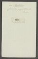 Phyllobius - Print - Iconographia Zoologica - Special Collections University of Amsterdam - UBAINV0274 029 01 03 0065.tif