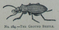 Picture Natural History - No 284 - The Ground Beetle.png