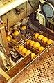 PikiWiki Israel 2473 Kibutz Gan-Shmuel zb3- 4 גן-שמואל-תפוזים בדרך להפיכתם למיץ.jpg