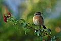 PikiWiki Israel 36651 spring.JPG