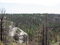 A ridge covered in pine trees